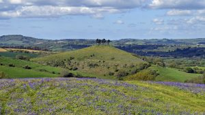 Colmers Hill by James Loveridge Photography