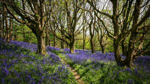 Eype Down by James Loveridge Photography