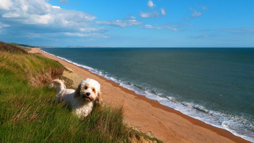 Dog Friendly Holidays in Dorset at Chesil Beach Lodge